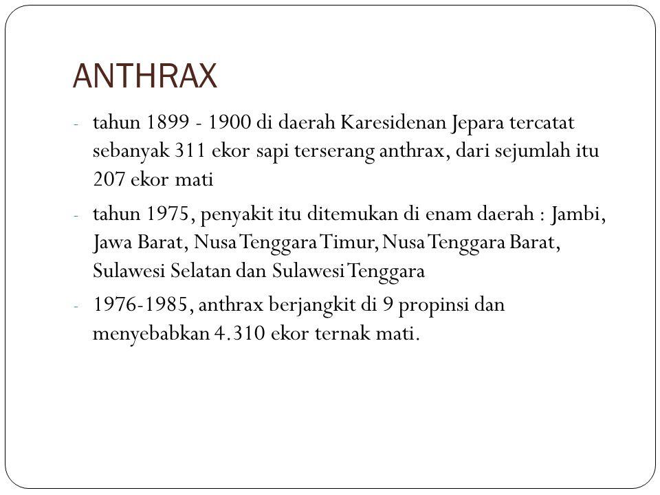 ANTHRAX tahun 1899 - 1900 di daerah Karesidenan Jepara tercatat sebanyak 311 ekor sapi terserang anthrax, dari sejumlah itu 207 ekor mati.