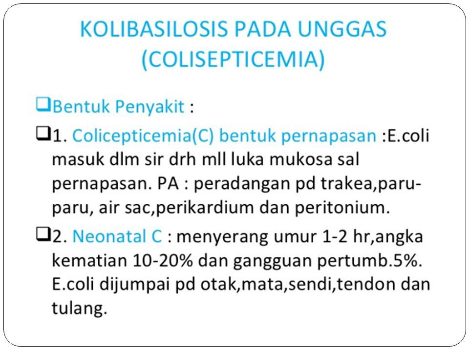 COLIBACILLOSIS