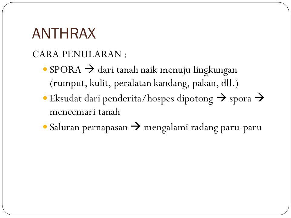ANTHRAX CARA PENULARAN :