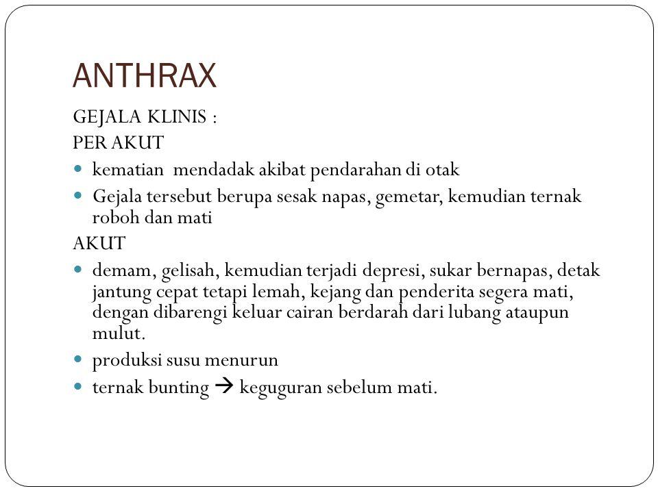 ANTHRAX GEJALA KLINIS : PER AKUT