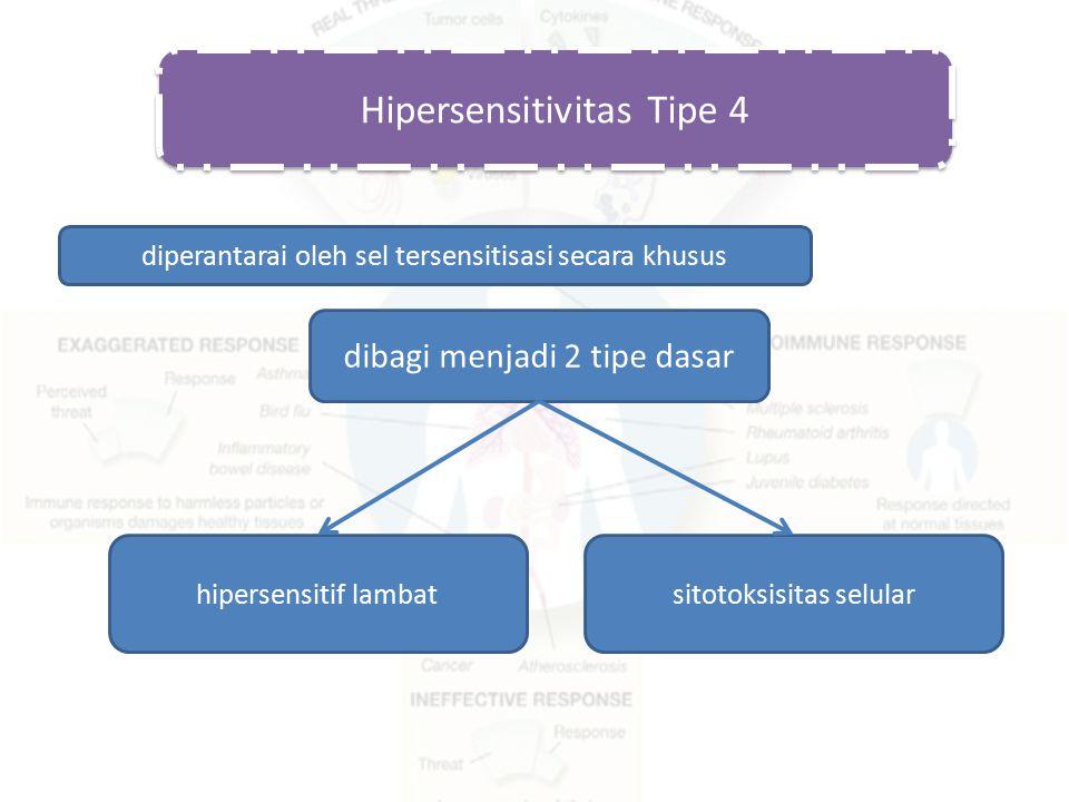 Hipersensitivitas Tipe 4