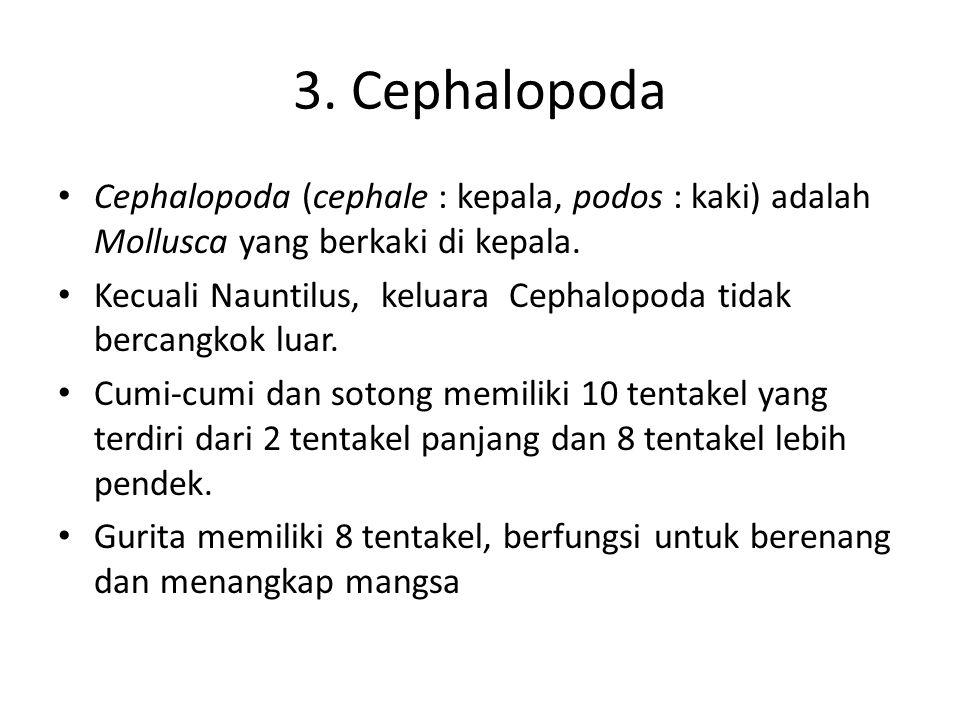 3. Cephalopoda Cephalopoda (cephale : kepala, podos : kaki) adalah Mollusca yang berkaki di kepala.