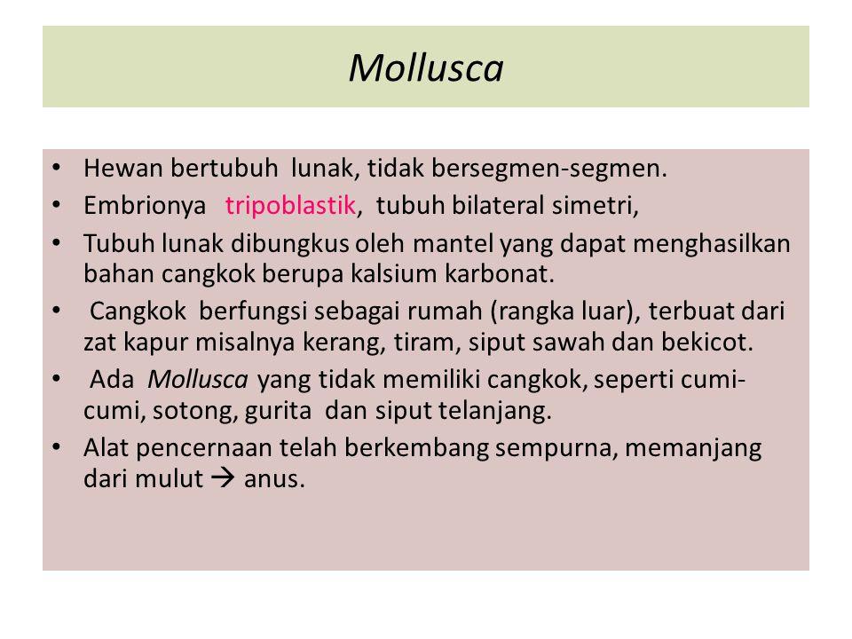 Mollusca Hewan bertubuh lunak, tidak bersegmen-segmen.