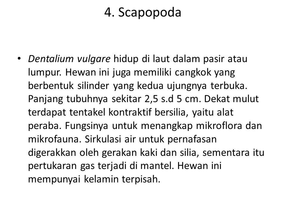 4. Scapopoda