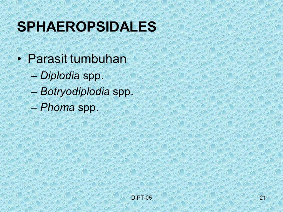SPHAEROPSIDALES Parasit tumbuhan Diplodia spp. Botryodiplodia spp.