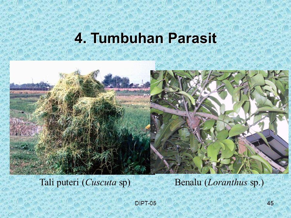 4. Tumbuhan Parasit Tali puteri (Cuscuta sp) Benalu (Loranthus sp.)