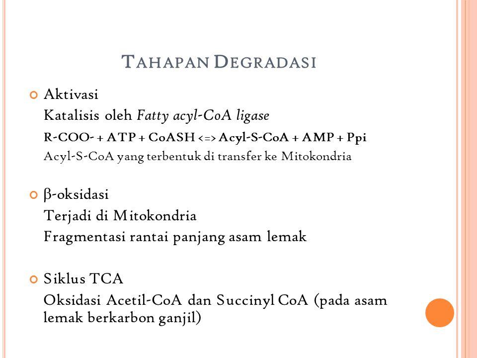 Tahapan Degradasi Aktivasi Katalisis oleh Fatty acyl-CoA ligase