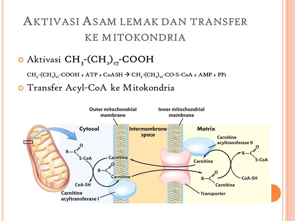 Aktivasi Asam lemak dan transfer ke mitokondria