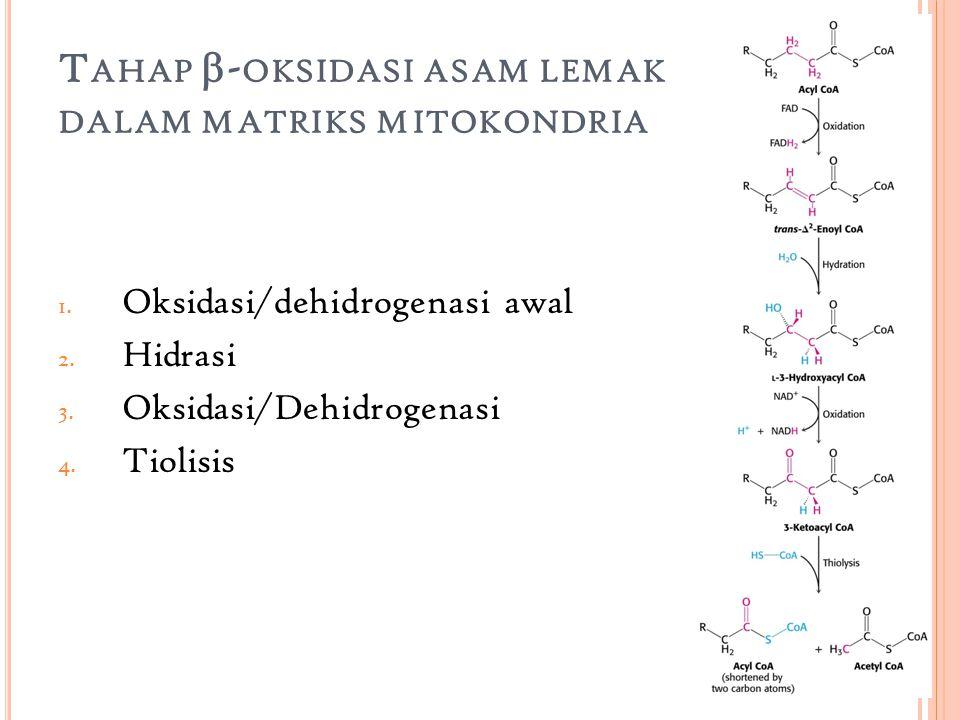 Tahap -oksidasi asam lemak dalam matriks mitokondria