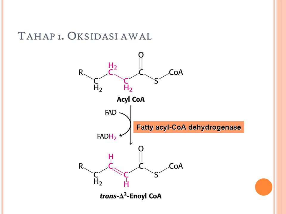 Tahap 1. Oksidasi awal Fatty acyl-CoA dehydrogenase