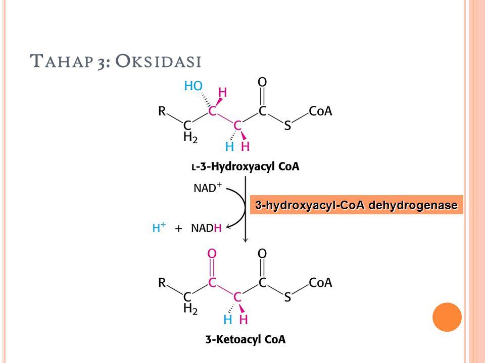 Tahap 3: Oksidasi 3-hydroxyacyl-CoA dehydrogenase