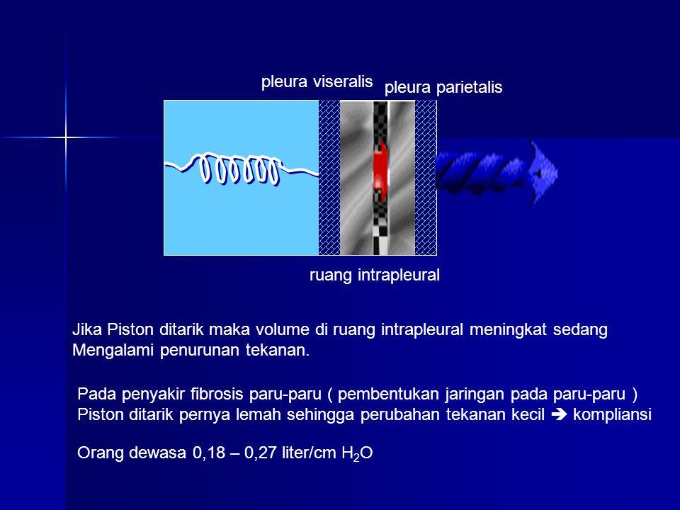 pleura viseralis pleura parietalis. ruang intrapleural. Jika Piston ditarik maka volume di ruang intrapleural meningkat sedang.