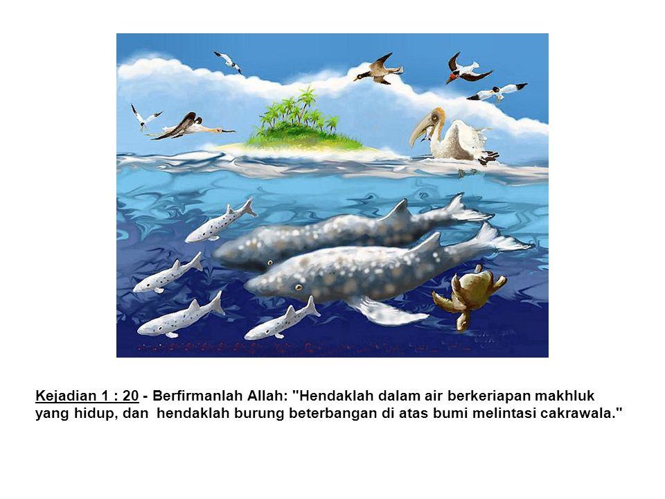 Kejadian 1 : 20 - Berfirmanlah Allah: Hendaklah dalam air berkeriapan makhluk yang hidup, dan hendaklah burung beterbangan di atas bumi melintasi cakrawala.