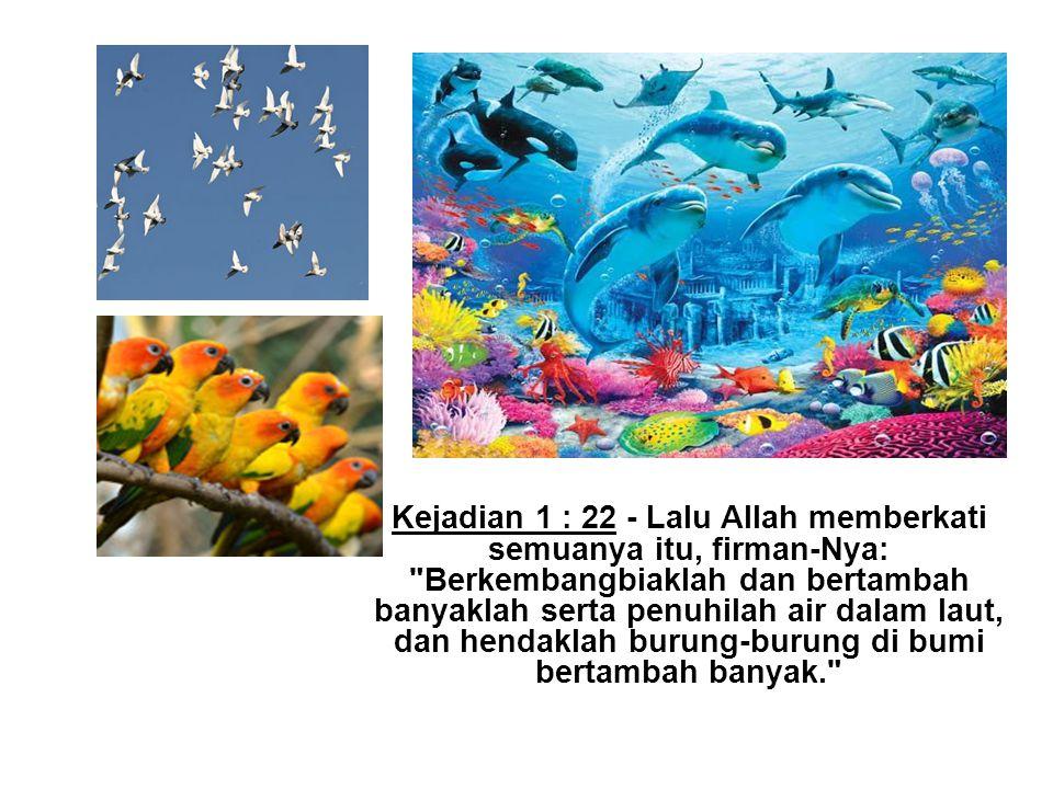 Kejadian 1 : 22 - Lalu Allah memberkati semuanya itu, firman-Nya: Berkembangbiaklah dan bertambah banyaklah serta penuhilah air dalam laut, dan hendaklah burung-burung di bumi bertambah banyak.