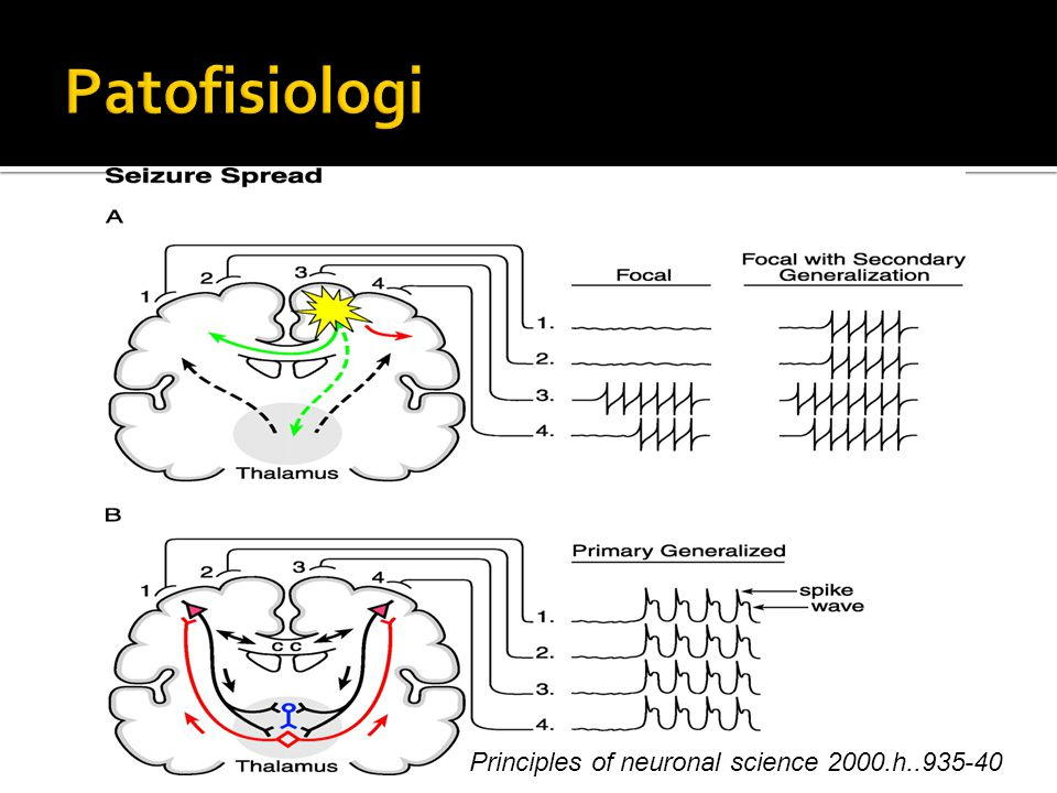 Patofisiologi Principles of neuronal science 2000.h..935-40