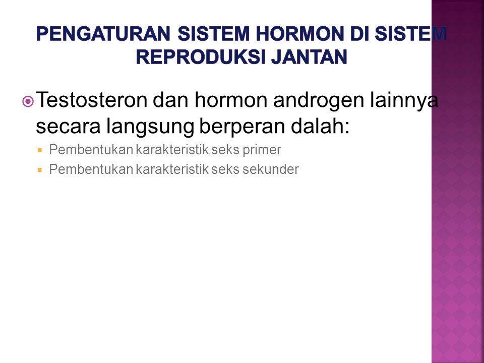 Pengaturan sistem hormon di sistem reproduksi jantan