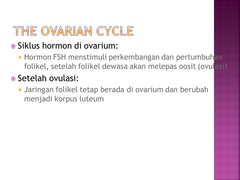 The Ovarian Cycle Siklus hormon di ovarium: Setelah ovulasi: