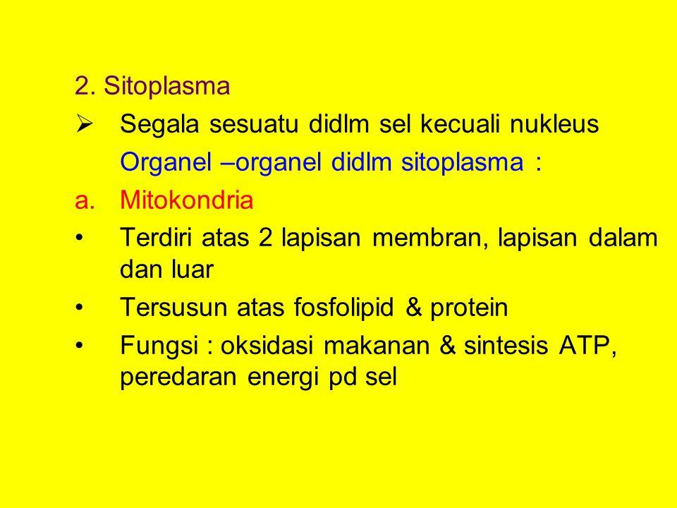 2. Sitoplasma Segala sesuatu didlm sel kecuali nukleus. Organel –organel didlm sitoplasma : Mitokondria.