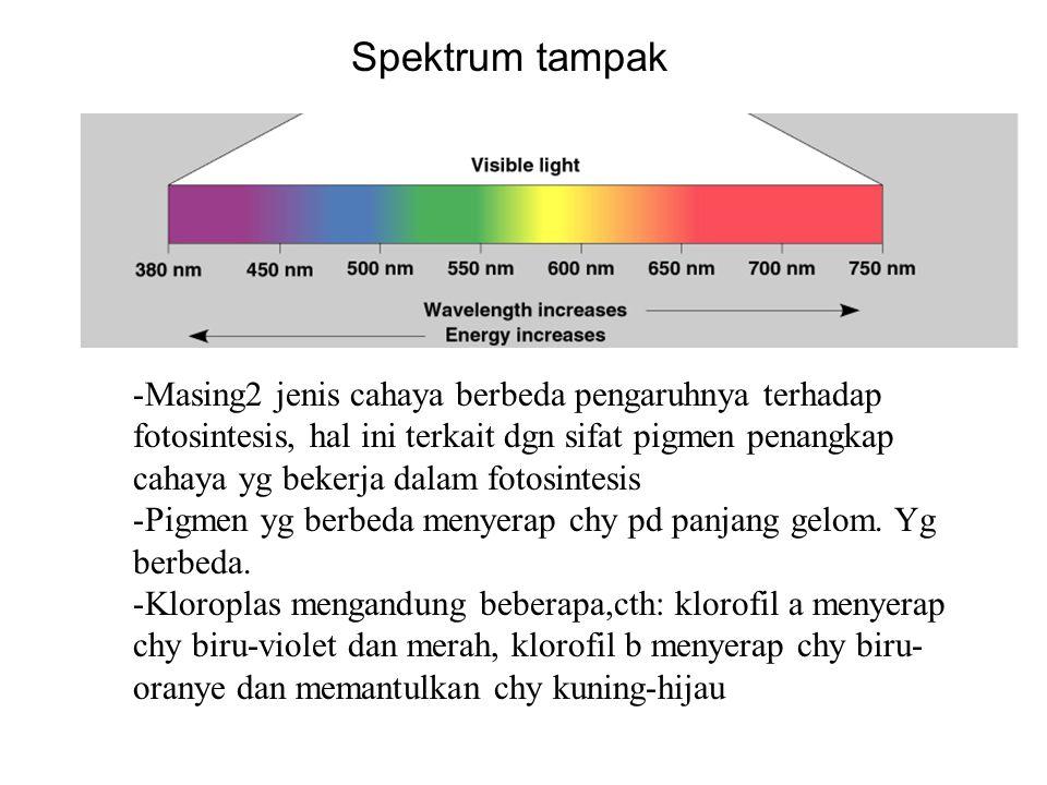 Spektrum tampak