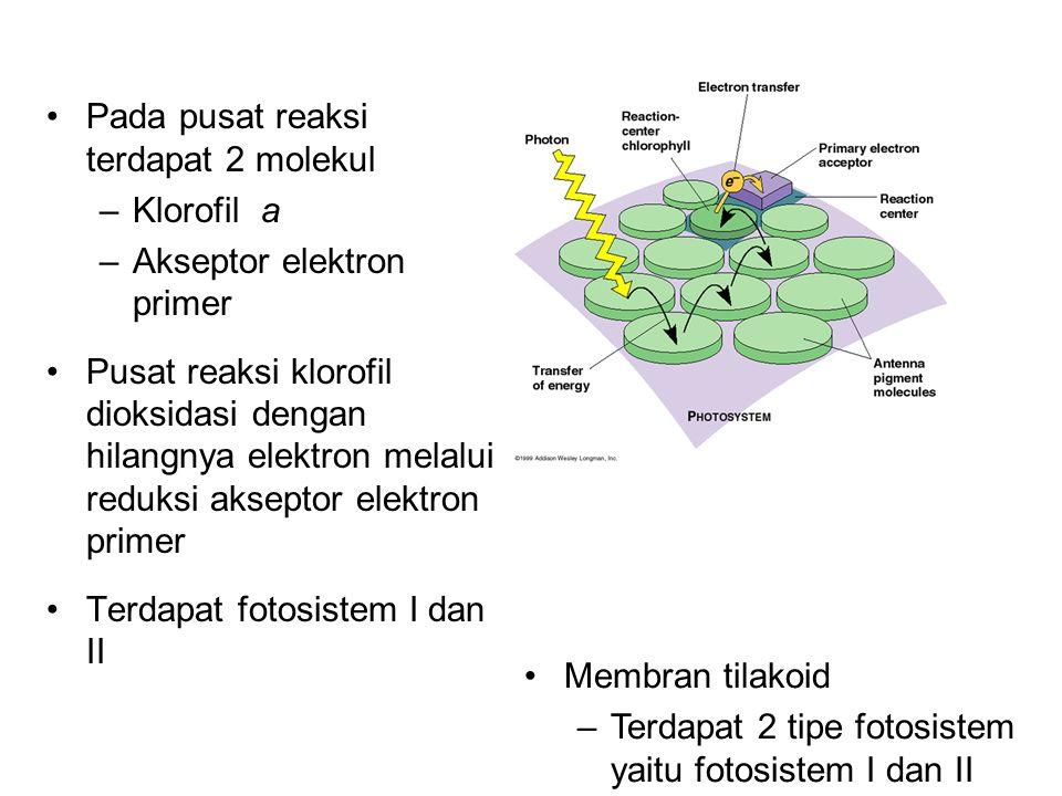 Pada pusat reaksi terdapat 2 molekul