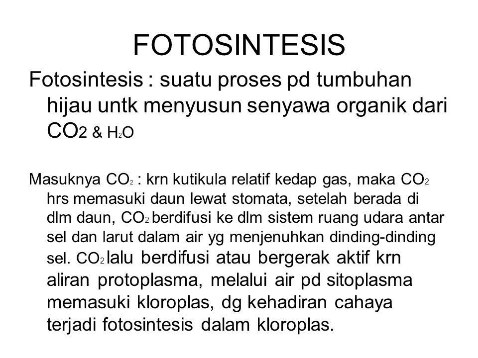 FOTOSINTESIS Fotosintesis : suatu proses pd tumbuhan hijau untk menyusun senyawa organik dari CO2 & H2O.
