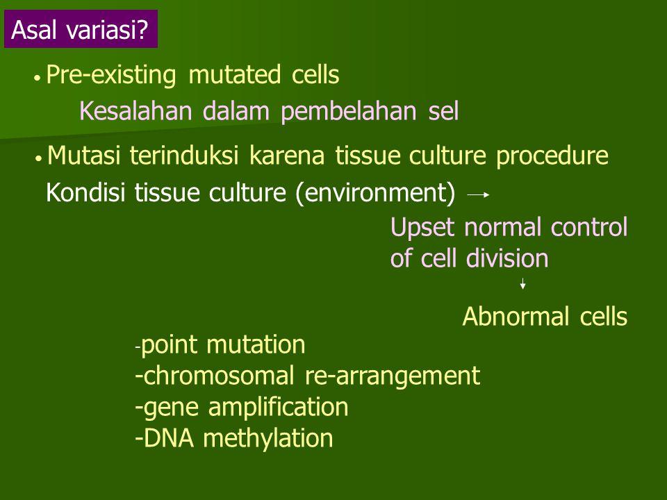 Kesalahan dalam pembelahan sel