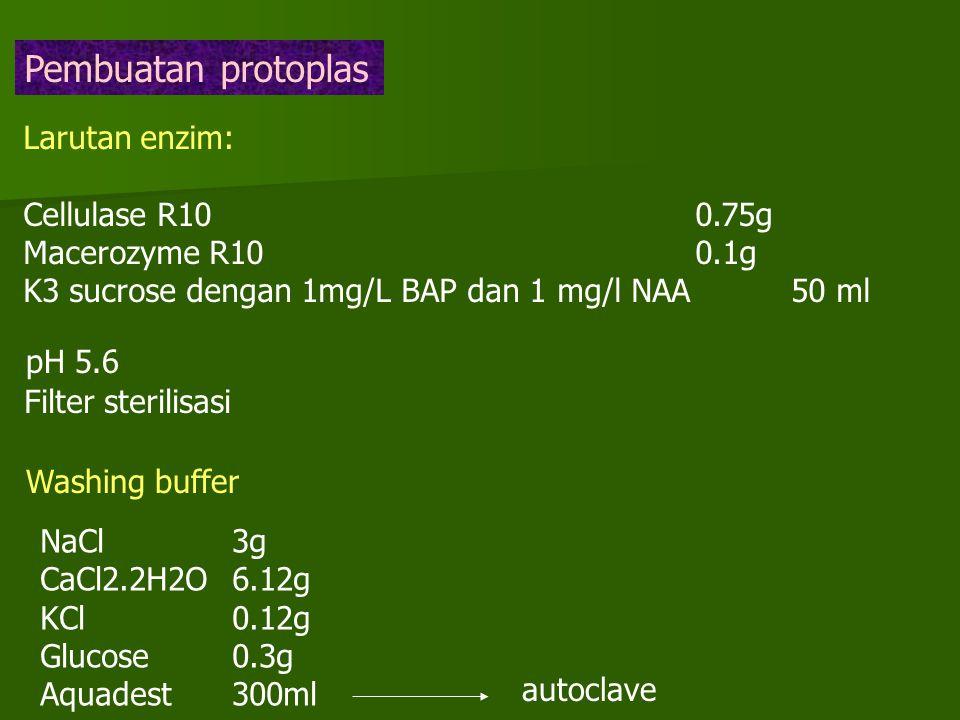 Pembuatan protoplas Larutan enzim: Cellulase R10 0.75g