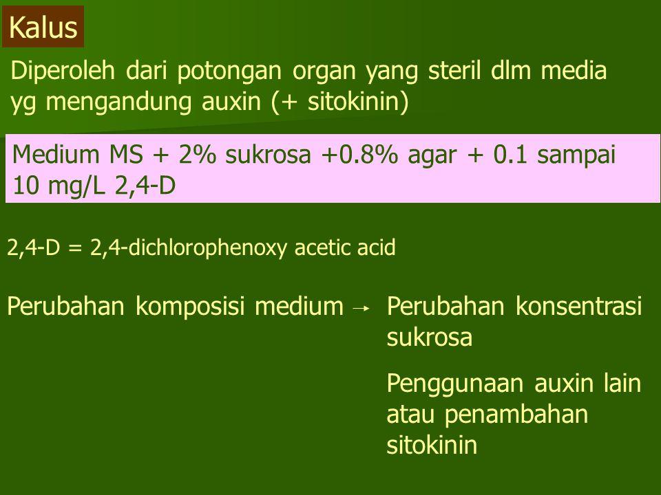 Kalus Diperoleh dari potongan organ yang steril dlm media yg mengandung auxin (+ sitokinin)