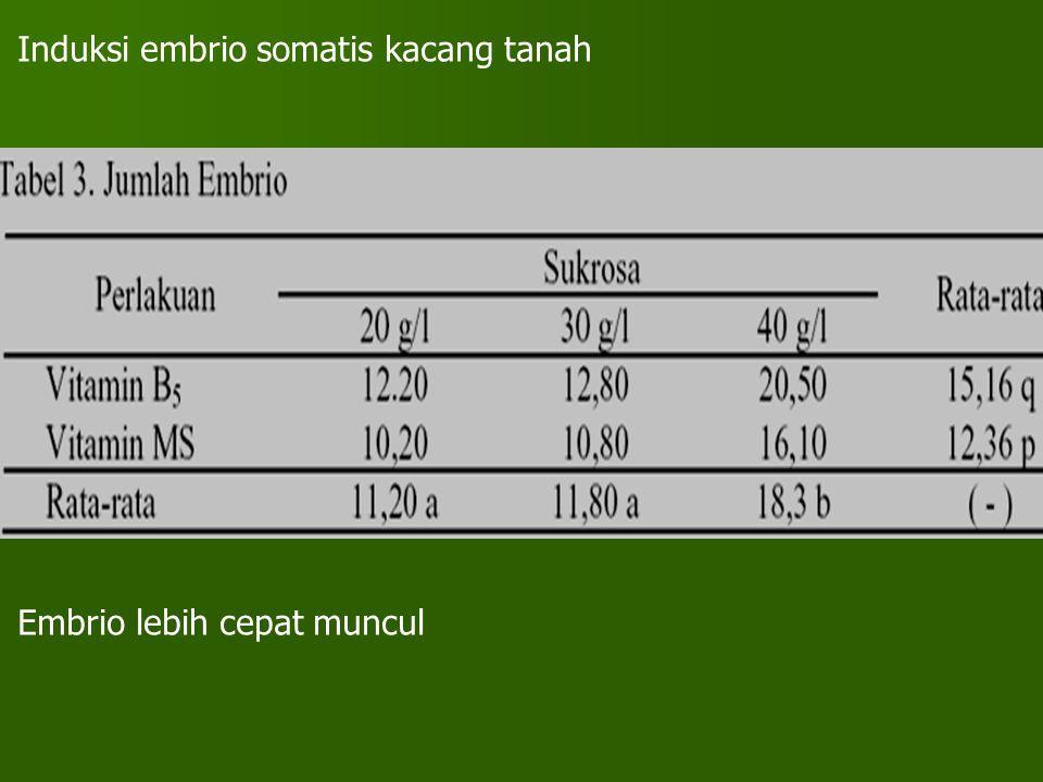 Induksi embrio somatis kacang tanah