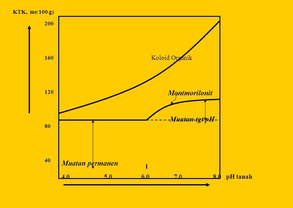 Koloid Organik Montmorilonit Muatan tgt pH Muatan permanen