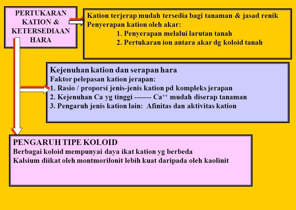 PERTUKARAN KATION & KETERSEDIAAN HARA