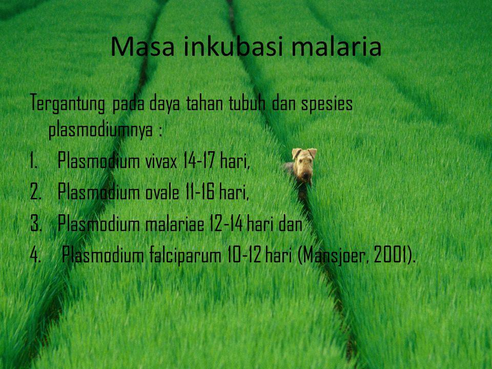 Masa inkubasi malaria Tergantung pada daya tahan tubuh dan spesies plasmodiumnya : Plasmodium vivax 14-17 hari,