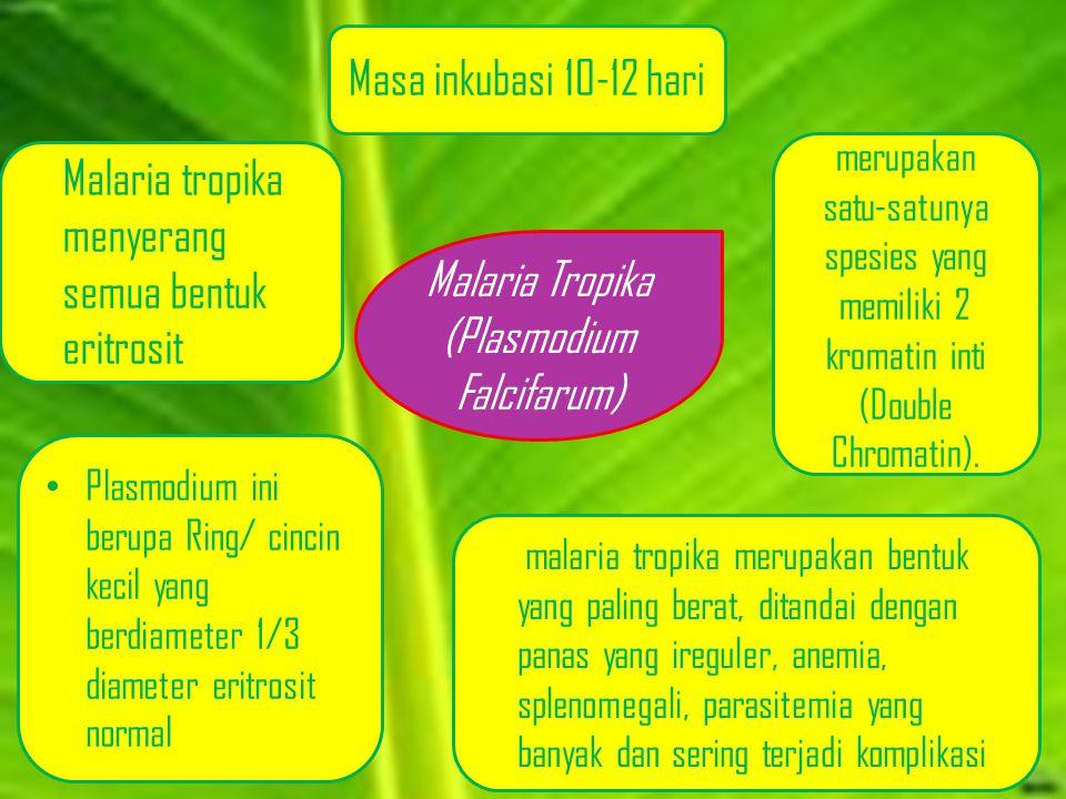 Malaria Tropika (Plasmodium Falcifarum)