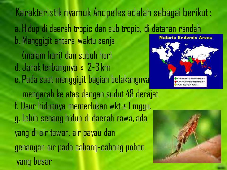 Karakteristik nyamuk Anopeles adalah sebagai berikut :