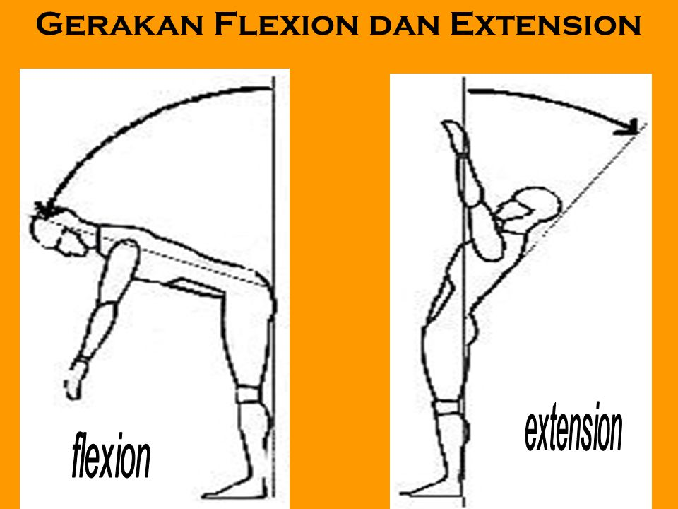 Gerakan Flexion dan Extension