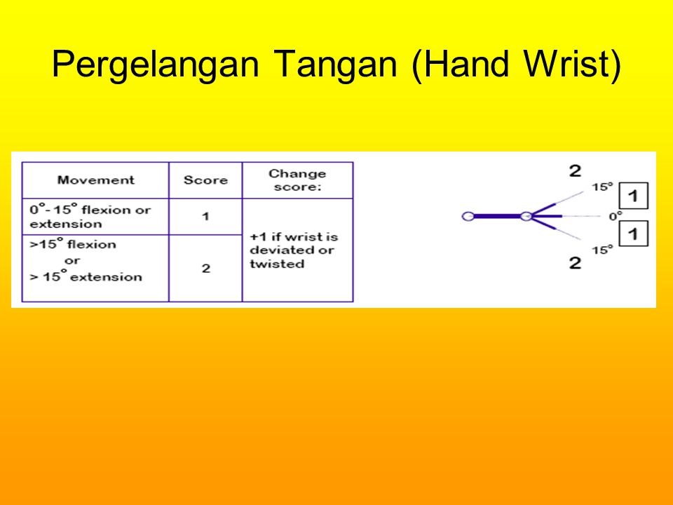 Pergelangan Tangan (Hand Wrist)