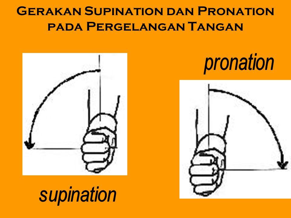 Gerakan Supination dan Pronation pada Pergelangan Tangan