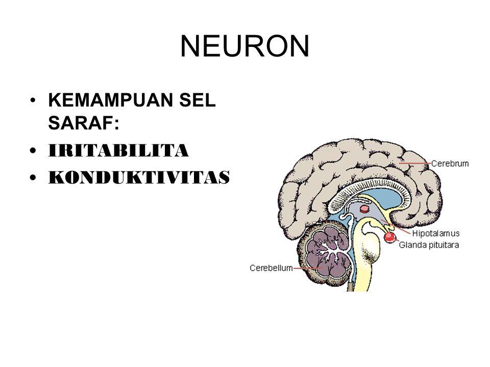 NEURON KEMAMPUAN SEL SARAF: IRITABILITA KONDUKTIVITAS
