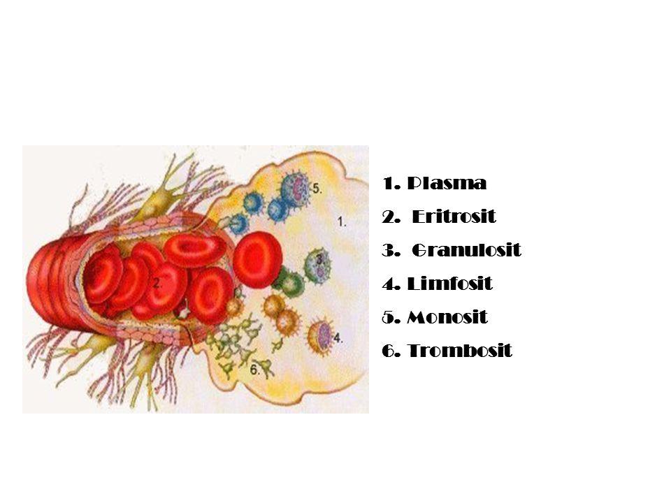 Plasma Eritrosit Granulosit Limfosit Monosit Trombosit