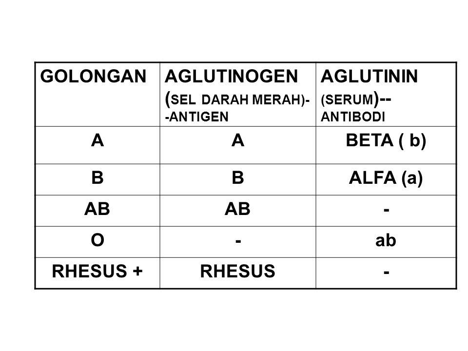 GOLONGAN AGLUTINOGEN (SEL DARAH MERAH)--ANTIGEN. AGLUTININ (SERUM)--ANTIBODI. A. BETA ( b) B. ALFA (a)