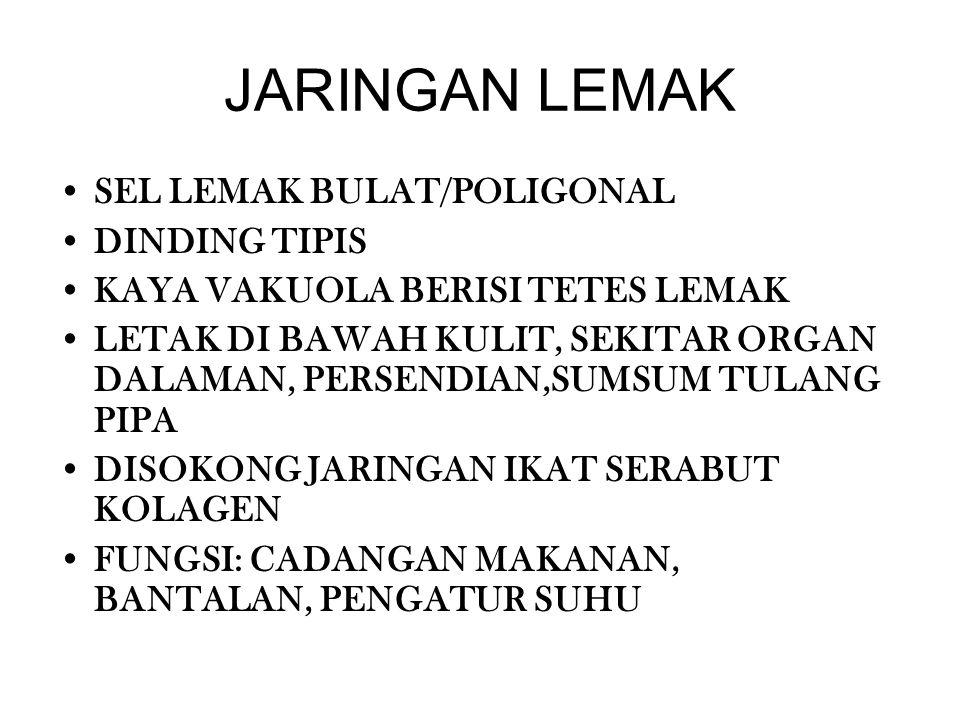 JARINGAN LEMAK SEL LEMAK BULAT/POLIGONAL DINDING TIPIS