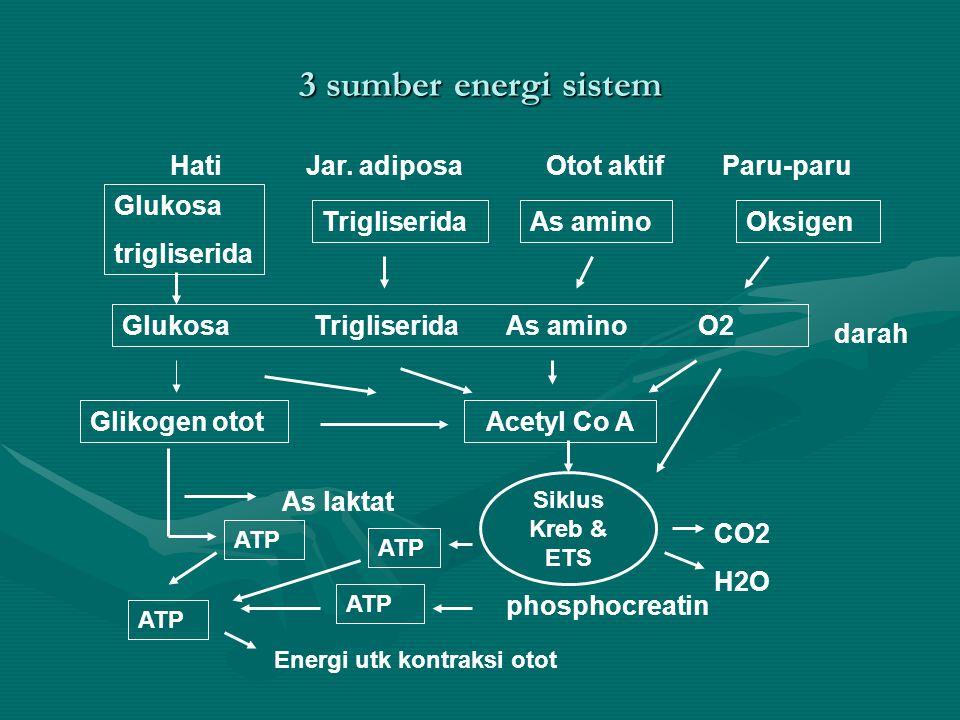 3 sumber energi sistem Hati Jar. adiposa Otot aktif Paru-paru Glukosa