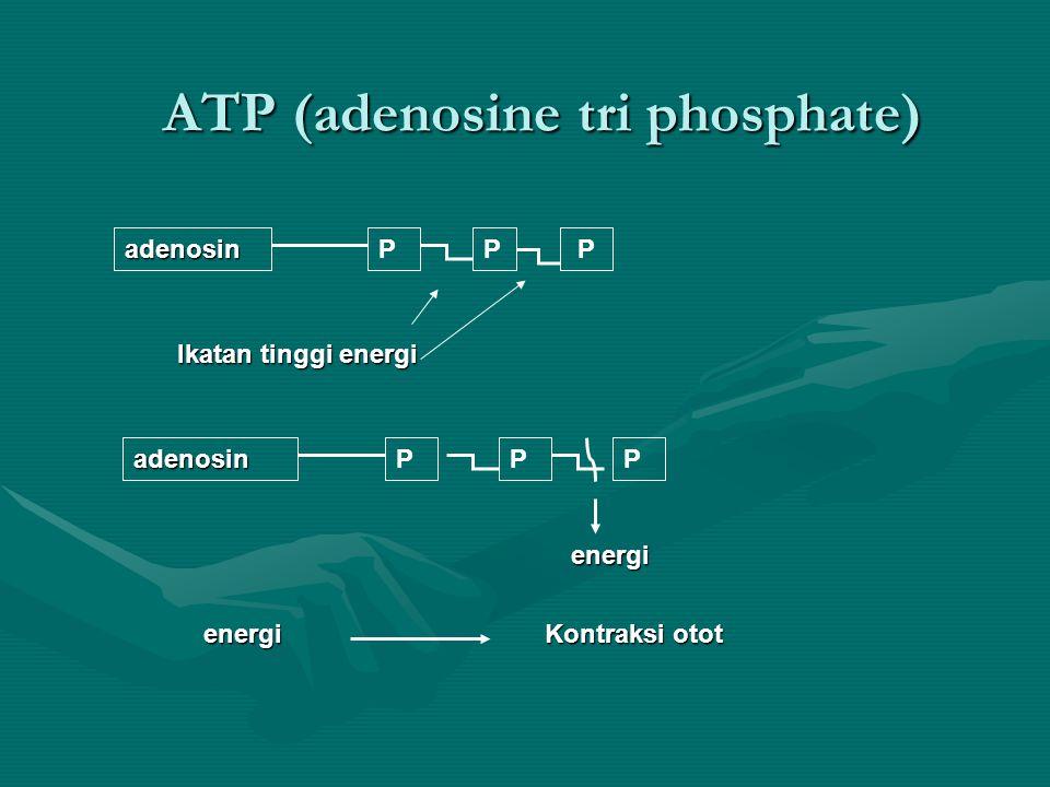 ATP (adenosine tri phosphate)