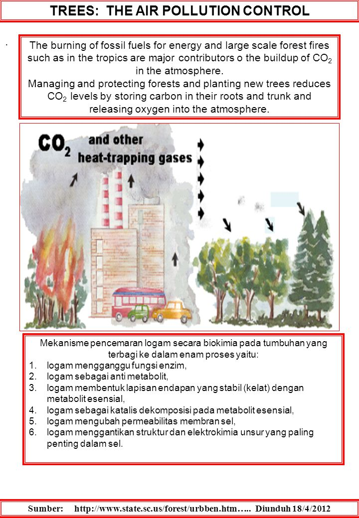 TREES: THE AIR POLLUTION CONTROL