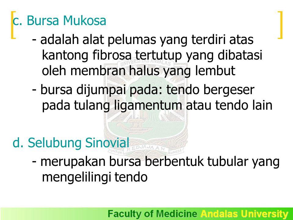c. Bursa Mukosa - adalah alat pelumas yang terdiri atas kantong fibrosa tertutup yang dibatasi oleh membran halus yang lembut.