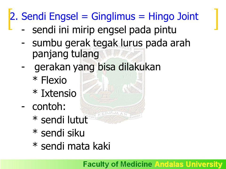 2. Sendi Engsel = Ginglimus = Hingo Joint