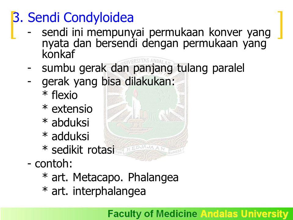 3. Sendi Condyloidea - sendi ini mempunyai permukaan konver yang nyata dan bersendi dengan permukaan yang konkaf.
