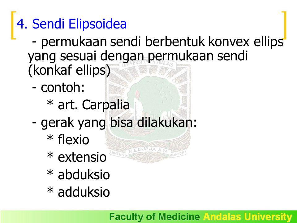 4. Sendi Elipsoidea - permukaan sendi berbentuk konvex ellips yang sesuai dengan permukaan sendi (konkaf ellips)