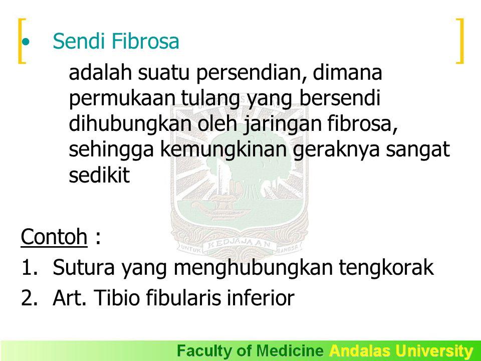 Sendi Fibrosa