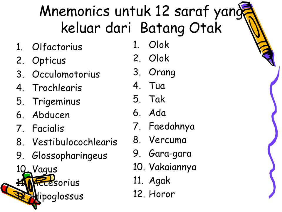 Mnemonics untuk 12 saraf yang keluar dari Batang Otak